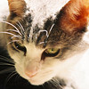 <b>Submitted By:</b> MOLLY CARROLL SHUGART <b>From:</b> TRAVERSE CITY <b>Description:</b> MY CBGB.  GREAT CAT, TERRIBLE VOICE.  YOU KNOW THE KIND.
