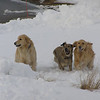 <b>Submitted By:</b> Nancy Schaefer <b>From:</b> Traverse City <b>Description:</b> Hickory, Boda and Polar playing on Old Mission Peninsula.