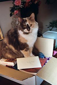 <b>Submitted By:</b> MOLLY CARROLL SHUGART <b>From:</b> TRAVERSE CITY <b>Description:</b> KITTY INA BOX.  MY BRIDGET.
