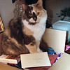<b>Submitted By:</b> MOLLY CARROLL SHUGART <b>From:</b> TRAVERSE CITY <b>Description:</b> KITTY INA BOX.  MY BRIDGET.