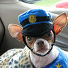 <b>Submitted By:</b> Susan Gail Anderson <b>From:</b> Traverse City <b>Description:</b> Ziggy Rock on the Beat