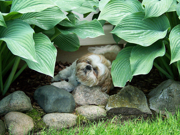 """<span style=""""display:none"""">Email: mjcullen@charter.net</span> <b>Submitted By:</b> Mary Jo Cullen <b>From:</b> Traverse City <b>Description:</b> Dog Day Afternoon"""