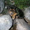 Troy Keith<br /> Rapid City, MI<br /> <br /> Photo of our dog taken at Torch Lake