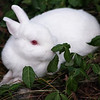 Miss Mary's Bunny playing in the back yard  by Peggy Zinn
