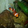 Found Nemo<br /> Paul J Nepote<br /> Traverse City, Michigan<br /> NIKON COOLPIX P4