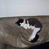 Charlene Dargis, Traverse City, This is my cat Bell sleeping with her legs <br /> stretched out.