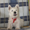 <b>Submitted By:</b> MOLLY CARROLL SHUGART <b>From:</b> TRAVERSE CITY <b>Description:</b> COOKIE, MY FRIEND'S DOG, WHO LIVES IN ROMANIA!