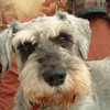 <b>Submitted By:</b> MOLLY CARROLL SHUGART <b>From:</b> TRAVERSE CITY <b>Description:</b> SCRUFF, MY FRIEND MICK'S DOG, WHO LIVES IN ENGLAND!