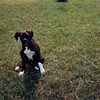 <b>Submitted By:</b> Thomas Baird <b>From:</b> Traverse City <b>Description:</b> This is our dog Trooper when he was a pup in 2002, in the front yard of our home in Elmwood Township.