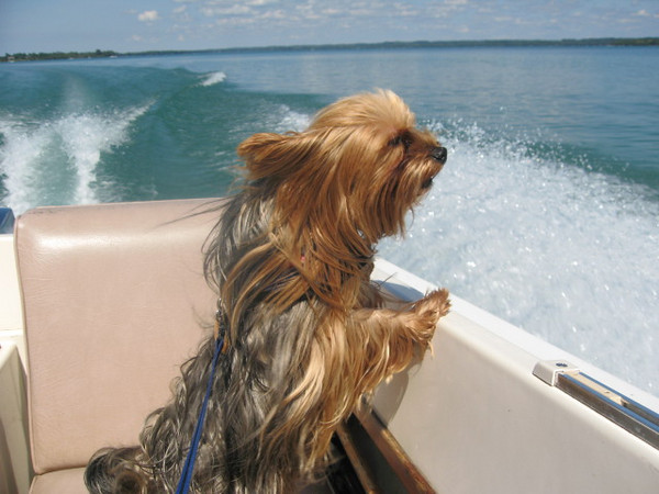 <b>Submitted By:</b> Helen Bethke <b>From:</b> Williamburg <b>Description:</b> Willie boating this summer on Elk Lake.