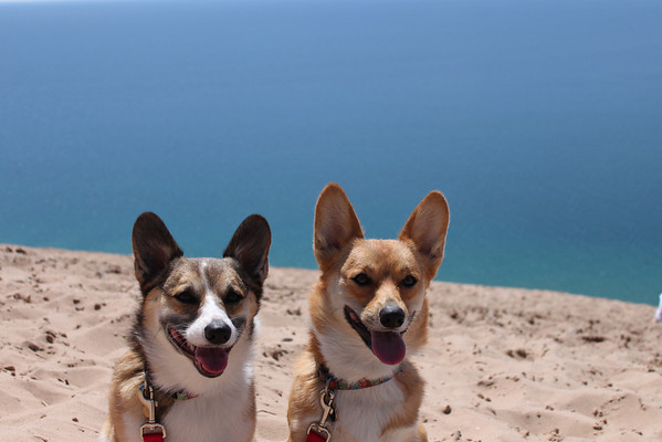 <b>Submitted By:</b> Geoff Harris <b>From:</b> Traverse City <b>Description:</b> Beau and Maxwell enjoying the view of the Sleeping Bear Sand Dunes