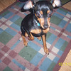 <b>Submitted By:</b> sierra parker <b>From:</b> traverse city michigan <b>Description:</b> i took the photo of my sisters dog in my back yard