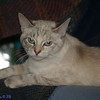 <b>Submitted By:</b> Randal S Hart <b>From:</b> traverse city <b>Description:</b>  my Suki...