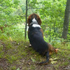 This picture of our dog Buster, was taken at the High Rollaway in Buckley <br /> MI.<br /> september 6th 2008<br /> Danielle Briggs<br /> Panasonic Lumix DMC FX3