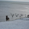<b>Submitted By:</b> Nancy Schaefer <b>From:</b> Traverse City <b>Description:</b> Winter at the beach.