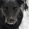 <b>Submitted By:</b> Marisa Menchaca <b>From:</b> Traverse City <b>Description:</b> I took this picture in December after my dog oscar played in the snow in our back yard.