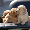 "Sean Finnegan<br /> Traverse City<br /> <br /> I was thinking this picture would fit well on the front page of the<br /> classifieds with the ""3 people/puppies"" doing something... These<br /> pictures were taken in Bellaire and the puppies are roughly 5 weeks old."