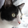 <b>Submitted By:</b> Jennica Wilson <b>From:</b> Traverse City <b>Description:</b> My cat Uli. Taken with a Canon Rebel EOS T2i.