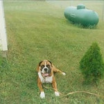 My dog Duke in the 1990's in Leelanau County<br /> <br /> Photographer's Name: Thomas Baird<br /> Photographer's City and State: Traverse City, MI