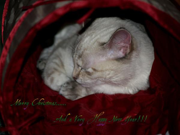 <b>Submitted By:</b> Randal S Hart <b>From:</b> traverse city <b>Description:</b> sleeping kitten, merry Christmas...