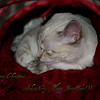 <b>Submitted By:</b> Randal S Hart <b>From:</b> traverse city <b>Description:</b> sleeping kitten, merry Christmas...