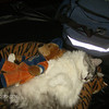 <b>Submitted By:</b> terry bross <b>From:</b> traverse city  <b>Description:</b> the cutes thing ive ever seen this is sahra asleep with her stuffed animal