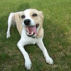 <b>Submitted By:</b> Jeffrey A Belanger <b>From:</b> Traverse City <b>Description:</b> A happy Lucy dog