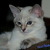 <b>Submitted By:</b> Randal  Hart <b>From:</b> traverse city <b>Description:</b> my new kitten, Suki...