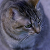 Princess has to be in the middle of whatever I am doing. Tonight, she walked<br /> in front of the camera while I was trying out a zoom lens, and this is what<br /> came of that. Cats surely do have their own minds, don't they!<br /> <br /> Bill Scott<br /> bshm@charter.net