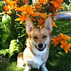 "<b>Submitted By:</b> LISA HARRIS <b>From:</b> TRAVERSE CITY <b>Description:</b> MAXWELL THE ""FLOWER CHILD"""