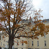 <b>Submitted By:</b> Roslyn Lambert <b>From:</b> Traverse City  <b>Description:</b> Taken at the State Hospital Grounds in October 2009. The leafs are falling but flowers are still in bloom.