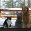 Harry, Hermonie and Nala :-)  <br /> <br /> Hope you like it.  Guess what they are looking at.  Guess what they want!<br /> <br /> Audrey Egbert<br /> Traverse City, MI