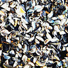 Special to the Record-Eagle/Meghan Kramer<br /> Zebra mussels pile up on a beach near the Charlevoix marina, and were captured by Meghan Kramer, a sophomore at Traverse City West Senior High. Meghan and her twin sister Kaitlin Kramer have been interested in photography since they were little.