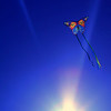 Special to the Record-Eagle<br /> St. Francis High School junior Kaitlyn Bussells photograph of a butterfly kite.