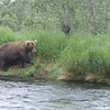 <b>Submitted By:</b> GARY B. HANSEN <b>From:</b> TRAVERSE CITY <b>Description:</b> ONE OF THE BEARS WE FISHED WITH FOR SALMON IN KATMAI NATL PARK