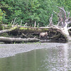 <b>Submitted By:</b> GARY B. HANSEN <b>From:</b> TRAVERSE CITY <b>Description:</b> FISHING WITH A BEAR PT A