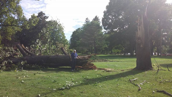 Photo by Dorothy Bates Bakita<br /> Majestic old tree downed at The Commons.