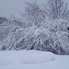 <b>Submitted By:</b> Myongsoon Cho <b>From:</b> Traverse City <b>Description:</b> After the storm