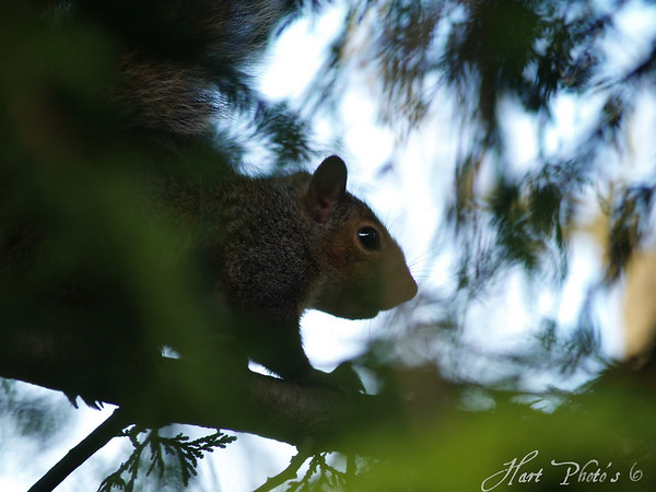 <b>Submitted By:</b> Randal S Hart <b>From:</b> traverse city <b>Description:</b> squirrel