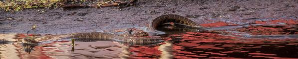 snake<br /> <br /> Photographer's Name: Peggy Sue  Zinn<br /> Photographer's City and State: Traverse City, MI