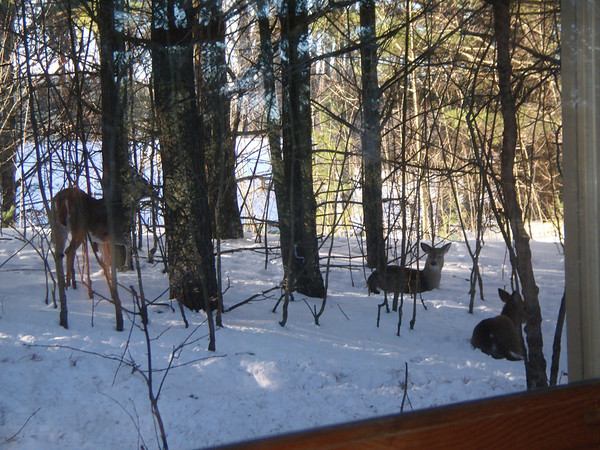 <b>Submitted By:</b> Lynn M Snyder <b>From:</b> Traverse City <b>Description:</b> I put up my blind in the morning,and there they were!