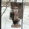 <b>Submitted By:</b> Paul James Nepote <b>From:</b> Traverse City <b>Description:</b> HELP I'M STUCK IN THE BIRD FEEDER!
