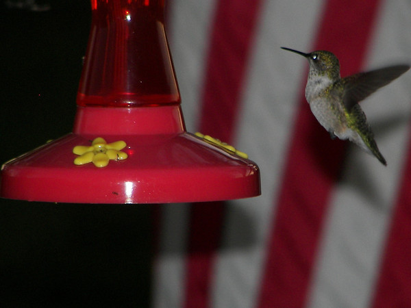 Hummingbird,   Interlochen. MI.<br /> Barbara J. Kuhlman<br /> Interlochen, MI.