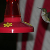 Hummingbird,   Interlochen. MI.<br /> Barbara J. Kuhlman<br /> Interlochen, MI.