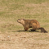Muskrat Love<br /> <br /> Photographer's Name: Peggy Sue  ZINN<br /> Photographer's City and State: Traverse City, MI