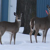 <b>Submitted By:</b> Susan Darnell <b>From:</b> Interlochen <b>Description:</b> This was taken near Lake Ann on a county road. Feb 2011