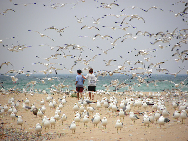 <b>Submitted By:</b> Heather Higham <b>From:</b> Rapid City <b>Description:</b> My nephews running along with some gulls on a stretch of Sleeping Bear Dunes shoreline