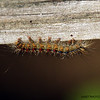 <b>Submitted By:</b> Randal Hart <b>From:</b> traverse city <b>Description:</b> catapillar