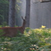 Kristine Hall<br /> Traverse City<br /> While leaving camp in the morning, from the Sand Lakes Quiet Area, I snapped <br /> a photo of the deer. I thought the picture was lost when the deer turned <br /> away. When I downloaded my photos I noticed the deer in the back. The second <br /> deer almost gives an effect of reflection.<br /> September 2007.