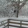 Backyard Visitor-Jan. 23rd 2013/ Sally Mayville-Interlochen<br /> <br /> Photographer's Name: Sally Mayville<br /> Photographer's City and State: Grawn, MI